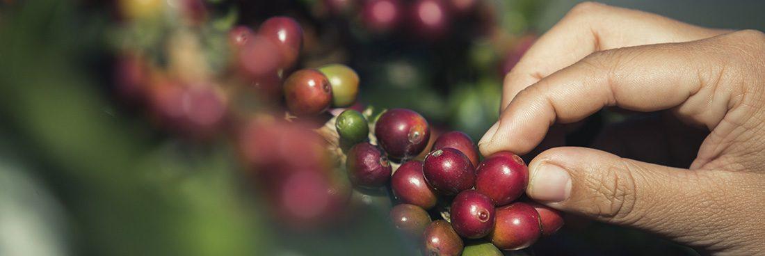 Organizaciones locales buscan fortalecer el Circuito del Café