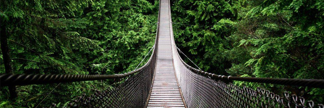 Panamá Rainforest