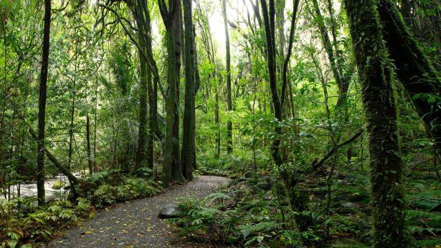 Panamá apuesta a convertirse en un destino de turismo verde con 1000km de senderos